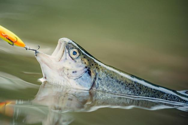 Рыба, пойманная на крючок в воде