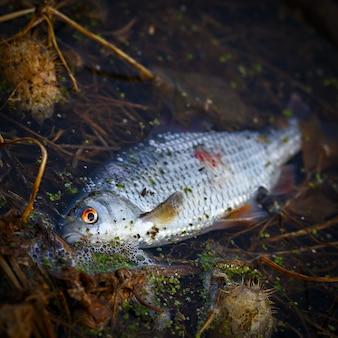 물고기는 오염된 물에서 죽습니다.