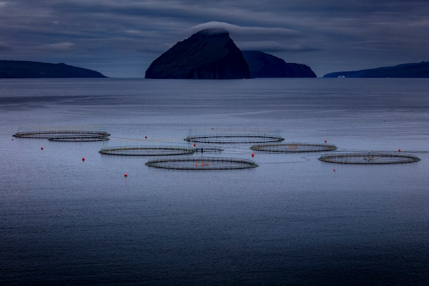 Fish farming detail