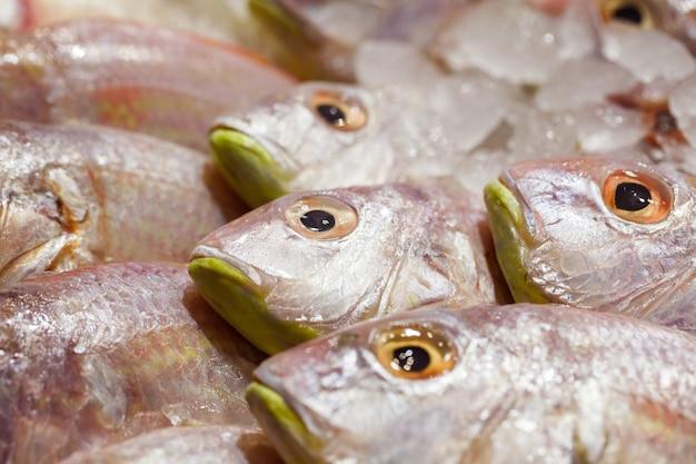 Fish fresh close-up in bulk on ice at fish market