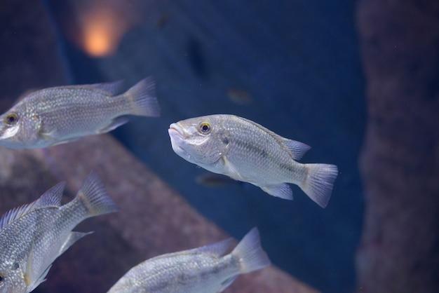 Рыба из танганики и озера малави