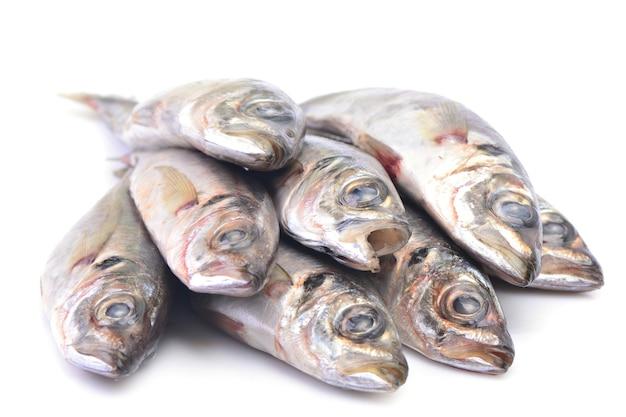 생선 전갱이