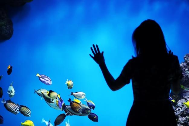 水族館で魚。海洋水族館。水族館の海の魚。自然保護の概念。水族館で水中の魚