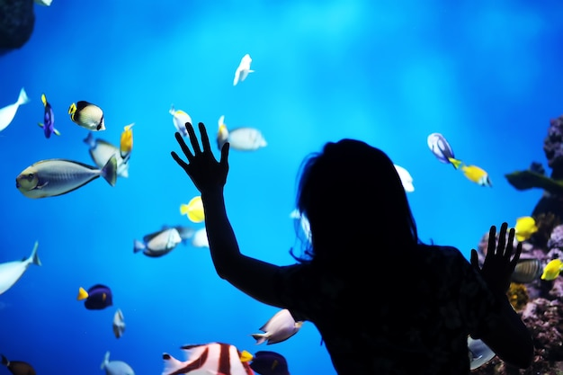 수족관에 있는 물고기. 수족관. 수족관에 있는 바다 물고기. 자연 보호 개념입니다. 수족관에서 수중 물고기