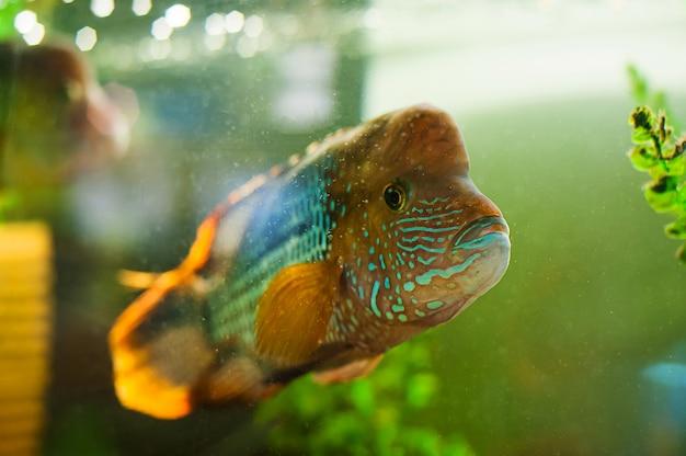 Рыба в аквариуме. контактный зоопарк