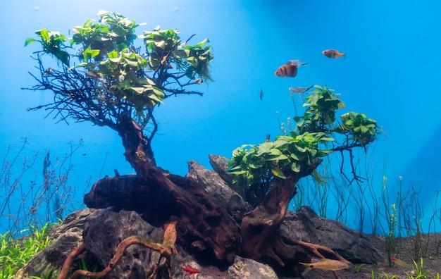 Fish and landscape in the aquarium