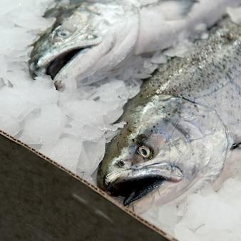 파이크 플레이스 마켓, 시애틀, 워싱턴 주, 미국에서 판매를위한 얼음 물고기