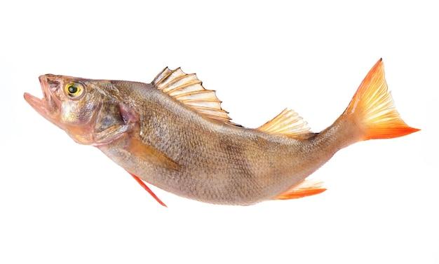 Рыбный окунь