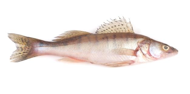 Fish perch