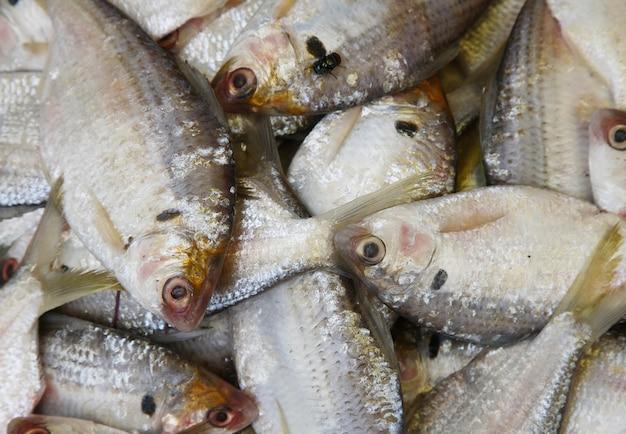 Pile di pesce