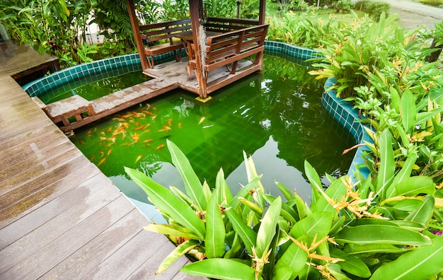 Fish pond with colorful fancy carp koi swimming underwater in garden