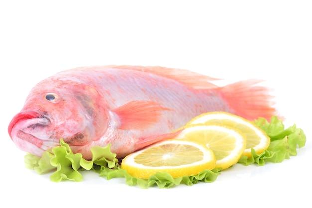 Рыба красная тилапия