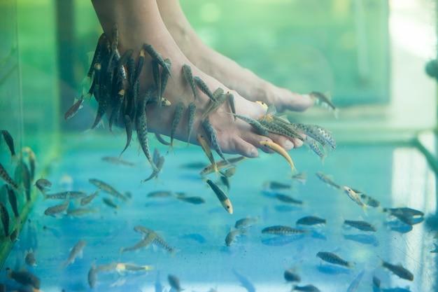 Рыбный спа-педикюр, педикюрный рыбный спа-салон, рыбный спа-массаж руфа гарра, крупный план ног и рыб в воде.