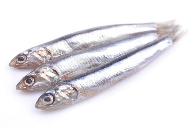 Fish of sprat