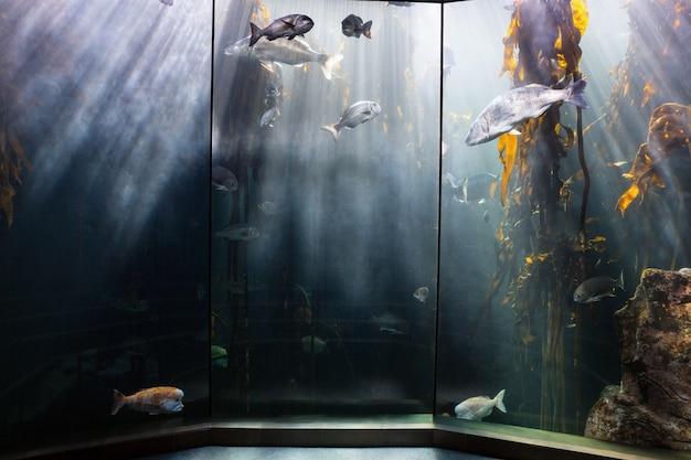 Fish swimming in a darkest tank with yellow algae