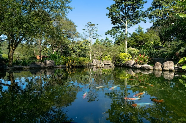 The fish swims in a pond in a beautiful green park in the heart of kuala lumpur, malaysia