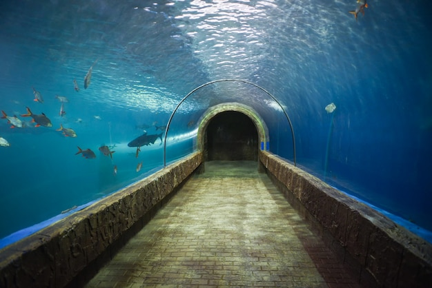 Fish tunnel at the aquarium underwater  different types of fish swimming aquarium tank