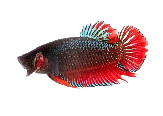 Fish on white background