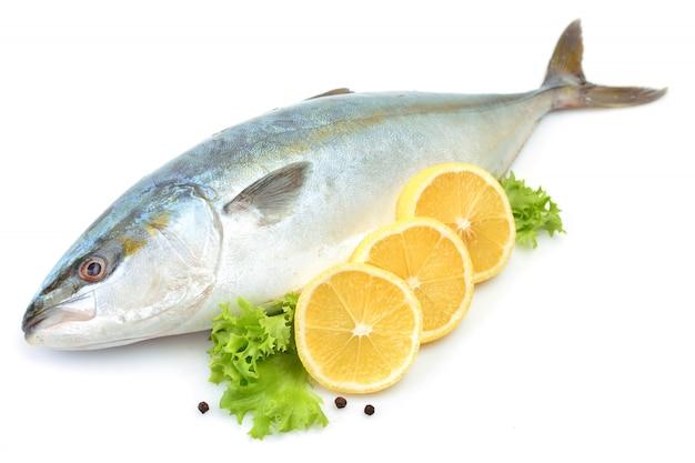 Fish yellowtai isolated (japanese amberjack)