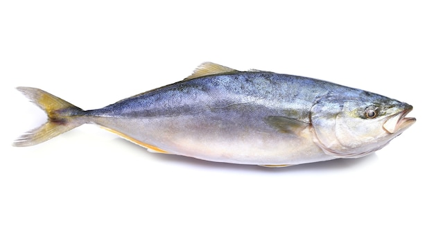 Желтая рыба на белом фоне (японский янтарь)