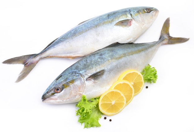 Рыба желтохвоста японская амберджек