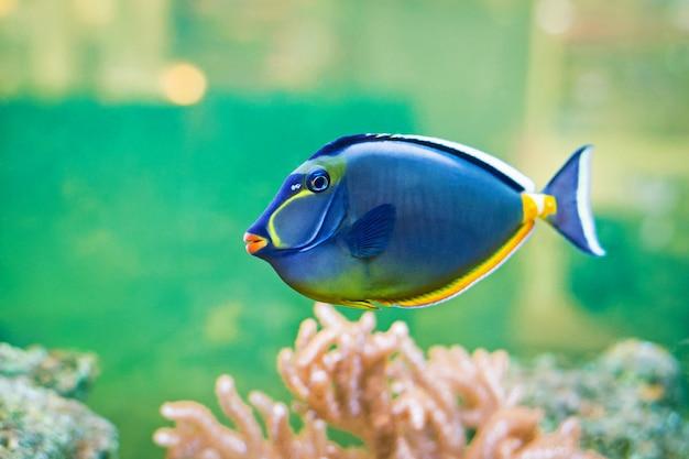 Aquarium Vectors, Photos and PSD files | Free Download