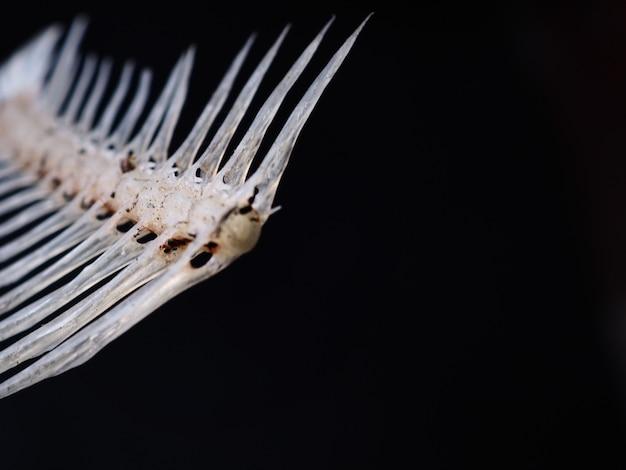 Fishbone on the black background.
