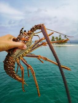 海の背景にイセエビを持っている漁師の手。シーフードのコンセプト。