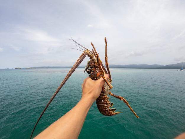 海の背景にとげのあるロブスターを持っている漁師の手シーフードのコンセプト