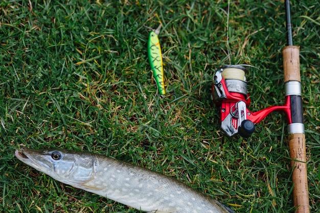Приманка для рыбалки, удочка и рыба на зеленой траве