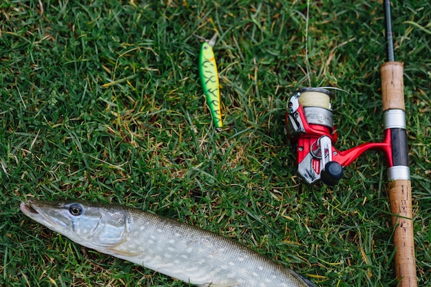 Fishing lure, rod and fish on green grass