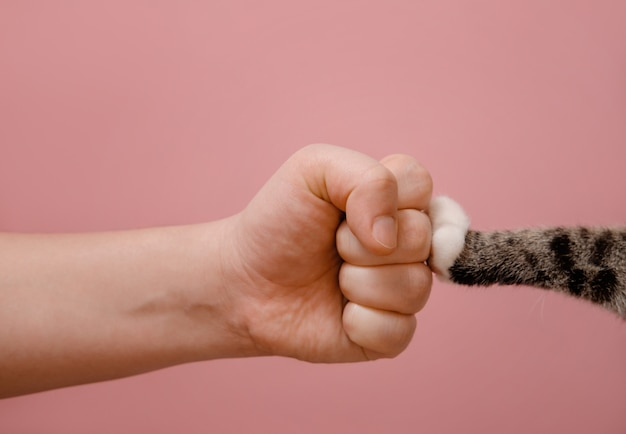 Fist hand and cat paw standoff of animals and people