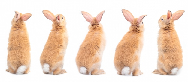 Five action of brown cute baby rabbit standing, backside isolated on white