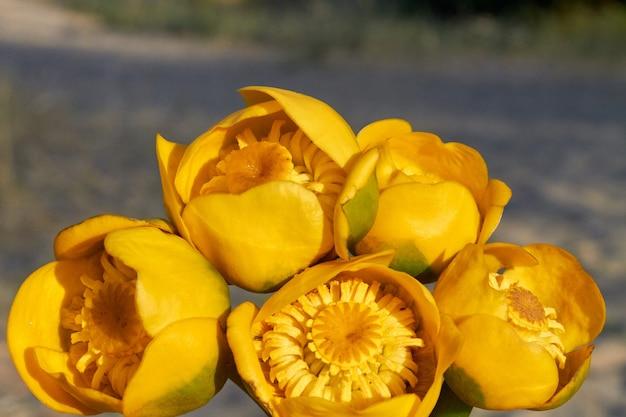 庭に生えている5つの美しい黄色いチューリップの花