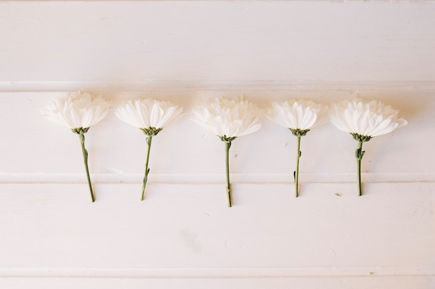 Five daisies on a row over a white wooden table