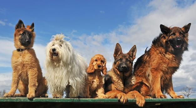 Пять собак