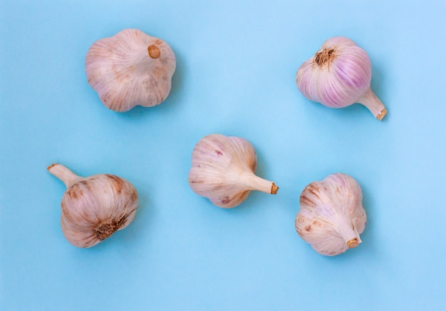 Five large heads of garlic lie on a blue background, flatley.