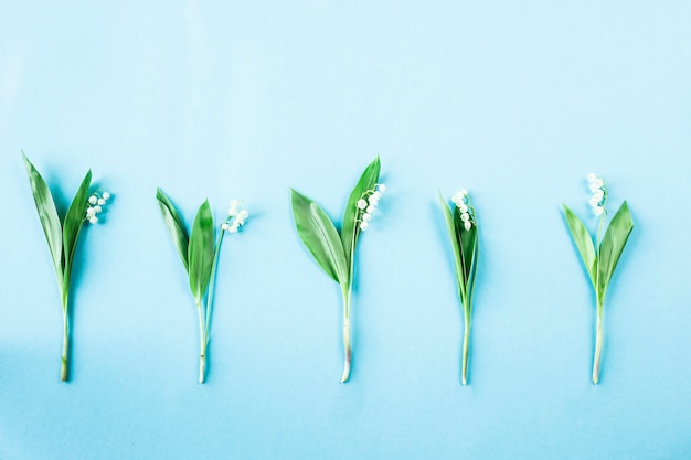 Five lily of the valley flowers lined up in a row on a blue background