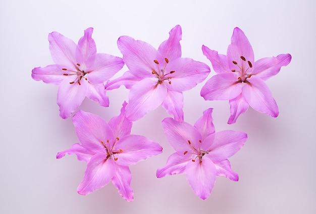 Пять фиолетовых лилий на белом виде сверху.