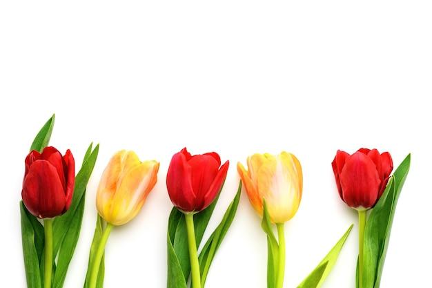 Пять красных и желтых тюльпанов, изолированные на белом фоне, копией пространства. весной и летом фон. день матери, пасха и сезонный праздник