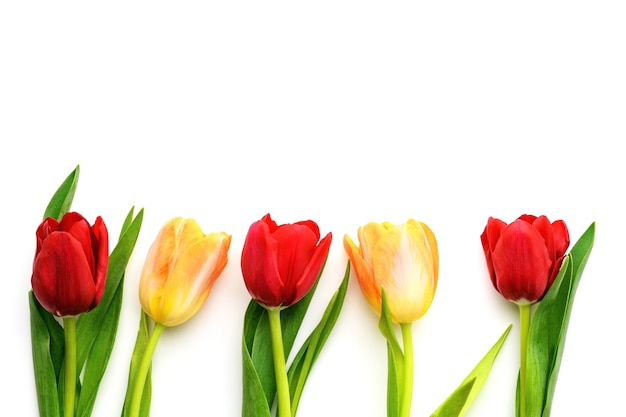Five red and yellow tulips isolated on white background, copy space. spring and summer backdrop. mother's day, easter and seasonal holiday