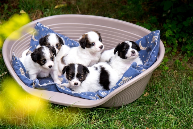 Five small puppies in a sleep basket