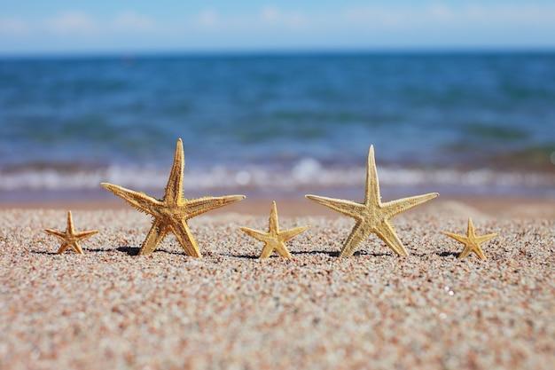 해안에 5 성급 호텔의 개념으로 바다 해변에 다섯 불가사리