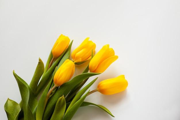 白い背景に 5 つの黄色いチューリップ