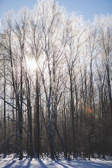 Хлопья снега покрыли землю и вершины деревьев