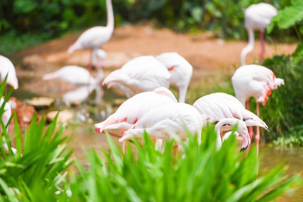 フラミンゴ鳥ピンクの湖川自然熱帯動物で美しい
