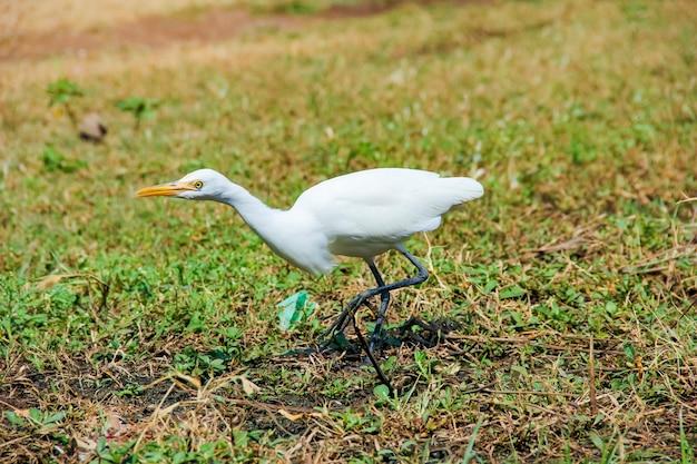 地球上を歩くフラミンゴの鳥