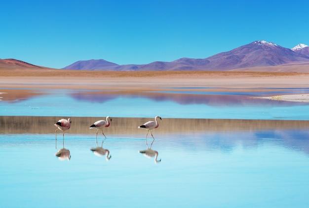 美しい山の湖のフラミンゴ