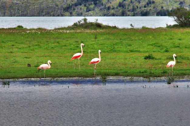 トレスデルパイネ国立公園、パタゴニア、チリのフラミンゴ