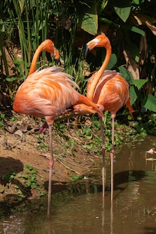 Flamingo is the most beautiful in the world